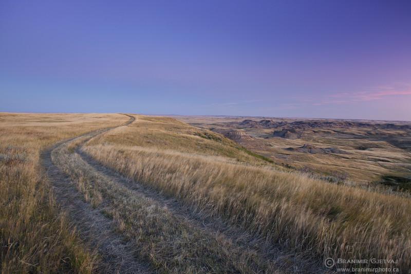 Winding trail through prairie at dawn, Grasslands National Park