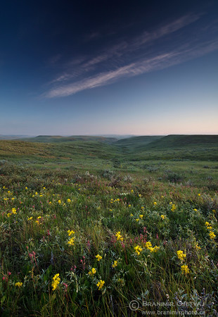 Native prairie with wildflowers in bloom, Grasslands National Park, Saskatchewan