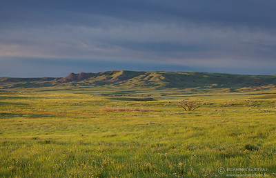 Prairie at sunrise. Grasslands National Park, Saskatchewan