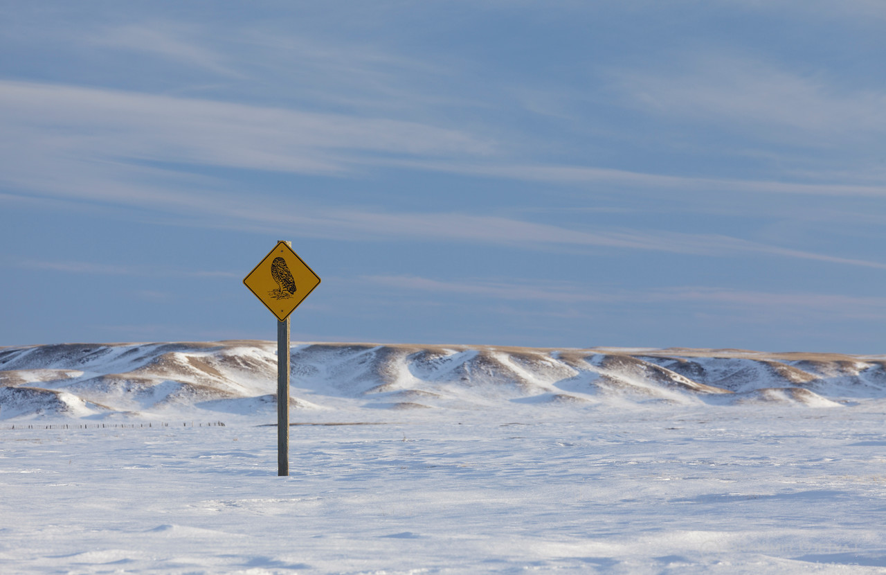 Burrowing owl road sign and prairie in winter. Grasslands National Park