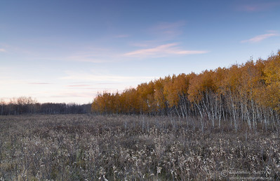 Autumn at Wolverine PFRA community pasture, Saskatchewan