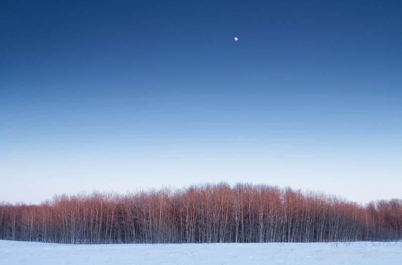 Moonrise over Wolverine PFRA community pasture. Plunkett, Saskatchewan
