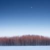 Moonrise over Wolverine PFRA community pasture. Plunkett, Saskatchewan