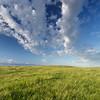 Prairie with death camas in bloom. Masefield PFRA pasture. Monchy, Saskatchewan