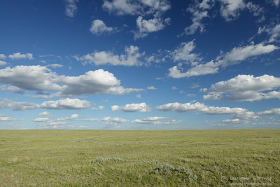 Native prairie at Battle Creek PFRA community pasture, Saskatchewan