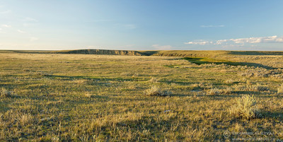 Native prairie at Govenlock PFRA community pasture, Saskatchewan