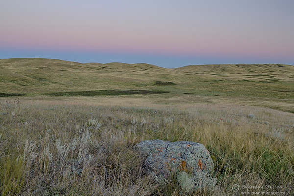 Native prairie at Fairview PFRA community pasture, Saskatchewan