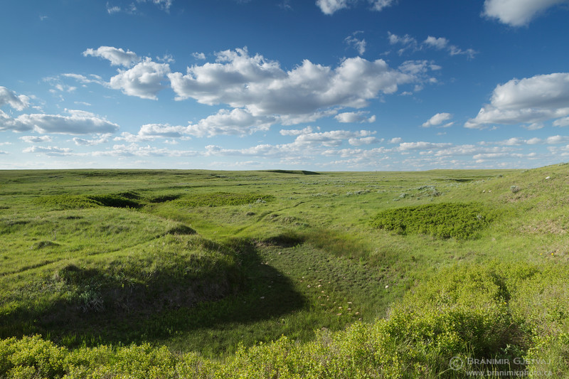 Prairie at Battle Creek PFRA community pasture, Saskatchewan