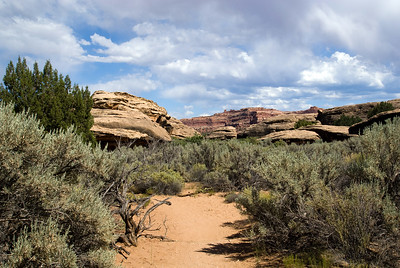 Canyonlands National Park | Utah | US - 0015
