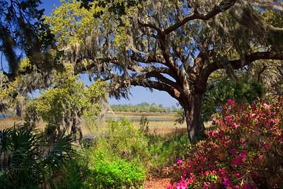 Spanish Moss on Live Oak Trees