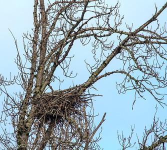 The new nest