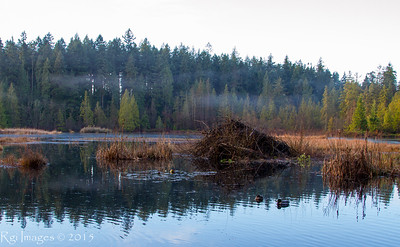 Beaver Lake, Stanley Park, Vancouver, BC
