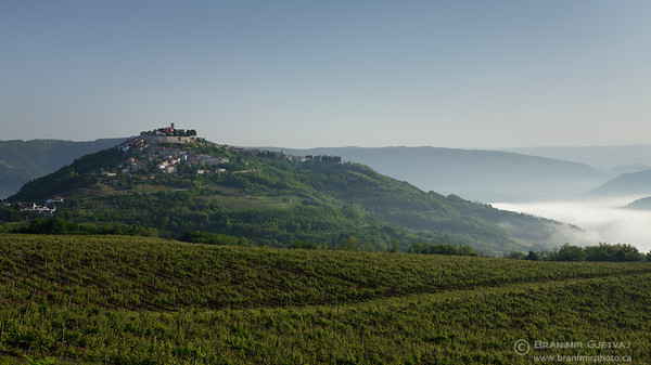 Vineyards surrounding the medieval town of Motovun. Istria, Croatia