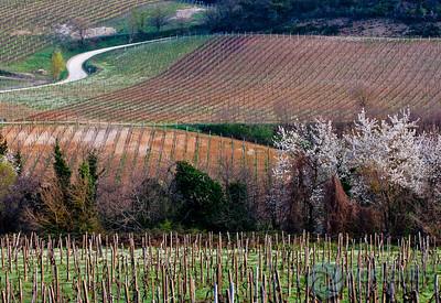 Vineyard Potential