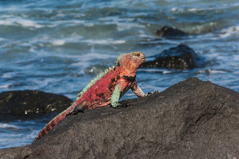 Ecuador-Galapagos-11