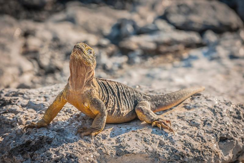 Ecuador-Galapagos-33