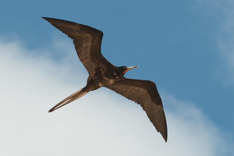 Ecuador-Galapagos-15