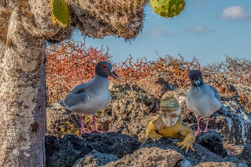 Ecuador-Galapagos-32