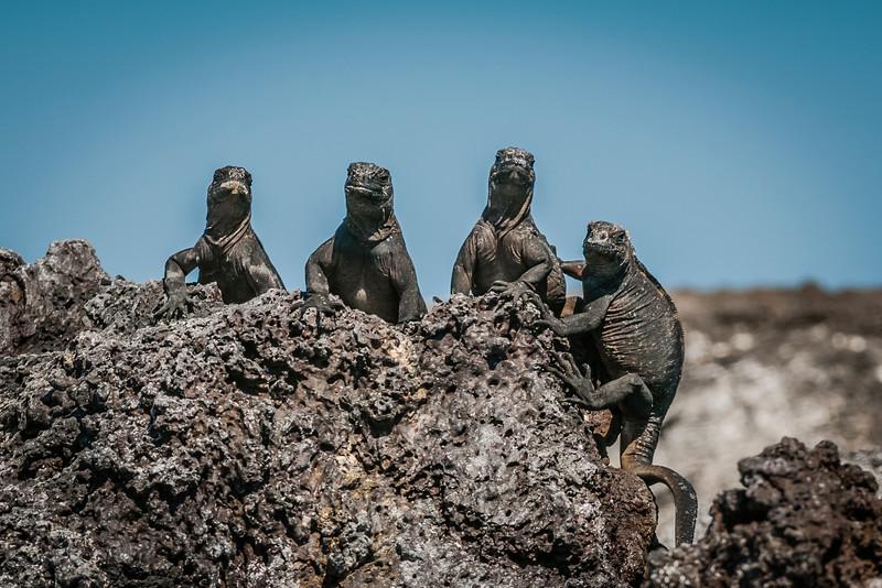 Ecuador-Galapagos-19