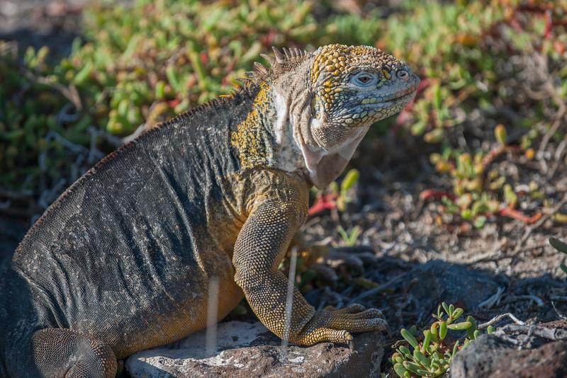 Ecuador-Galapagos-34