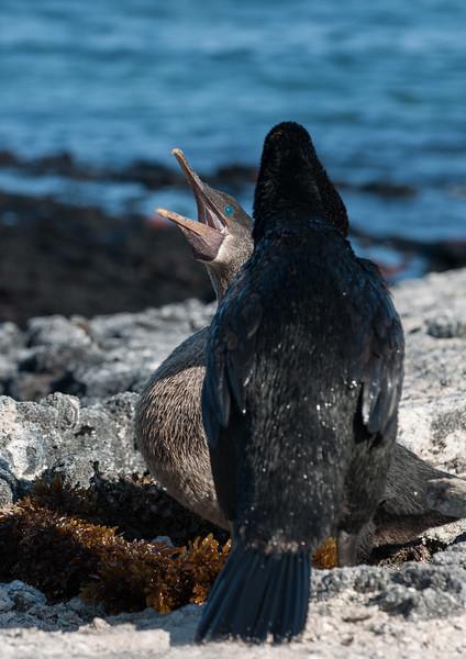 Ecuador-Galapagos-31