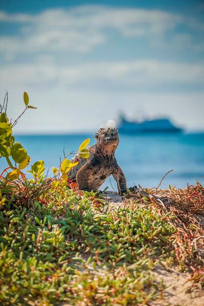 Ecuador-Galapagos-38