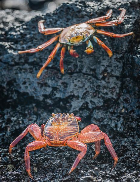 Ecuador-Galapagos-13