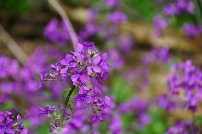 Flowers | Leland, MI - 0005