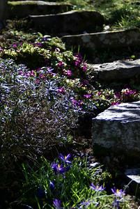 Blumen   Solingen, Germany - 0031