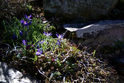 Frühling | Solingen, Germany - 0042