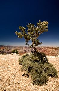 Grand Canyon National Park | Arizona | US - 0001