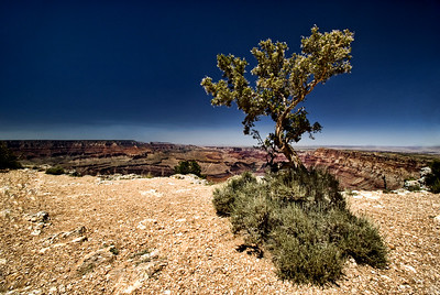 Grand Canyon National Park | Arizona | US - 0020