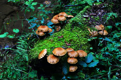 Mushrooms | Hocking Hills, OH | US - 0025