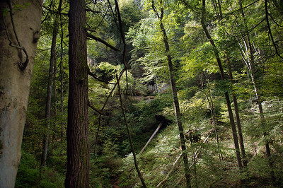 Cantwell Cliffs  | Hocking Hills, OH | US - 0047