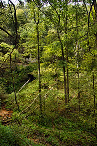 Cantwell Cliffs  | Hocking Hills, OH | US - 0048