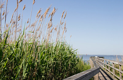 Sea Oats and Boardwalk - Room for Text