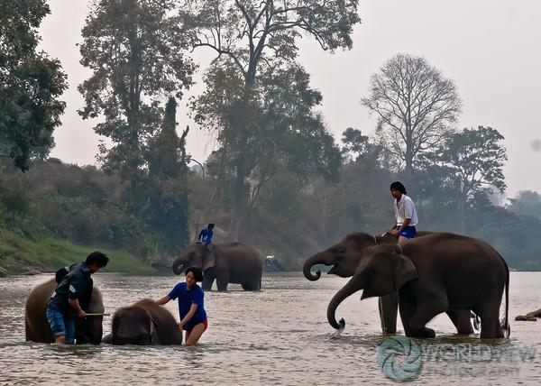 Scrub a dub (Thailand)