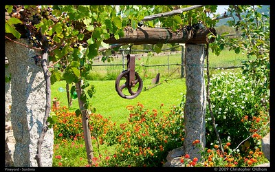 Vineyard Trellis