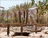 Feiran Oasis, Sinaï
