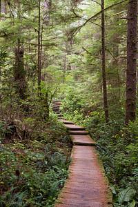 Trail to Cape Alava.