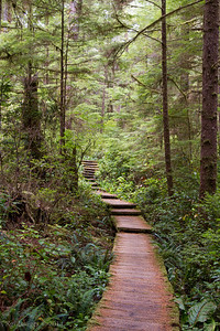 Trail to Cape Alava.