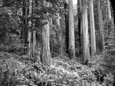 Redwood National Park | Crescent City, California | US - 0003