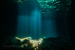 Light rays shine through a hole in the ceiling of Thunderball Grotto in the Exuma Cays