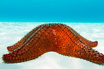 starfish, sand, flats, red, blue