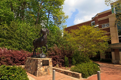 The Ram Statue at UNC Chapel Hill