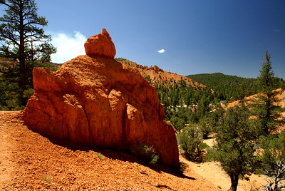 Red Canyon | Utah | US - 0008
