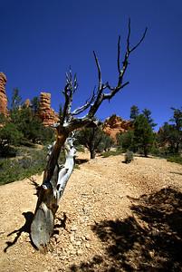 Red Canyon   Utah   US - 0001
