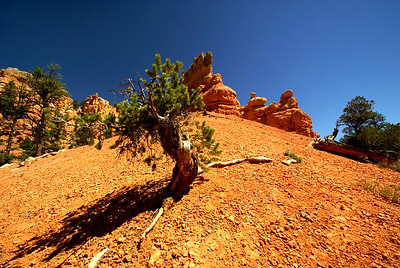 Red Canyon | Utah | US - 0009