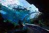 Dangerous Reef Tank Tunnel