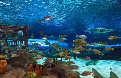 North Carolina Photography Photo Keywords Ripleys Aquarium